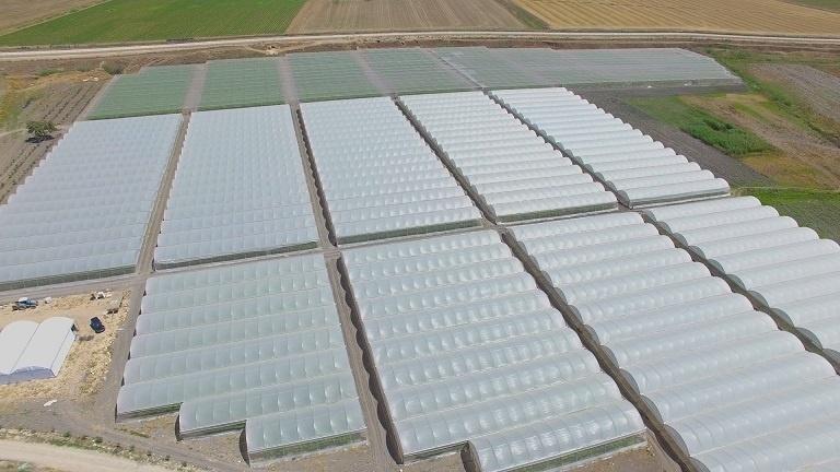 """مزرعة """"الدالية"""" في الأغوار تطرح باكورة محصولها بعد ثلاث سنوات من الاستثمار"""