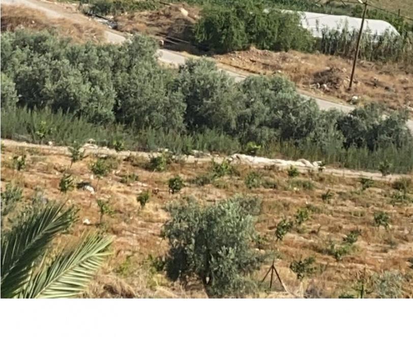 صور- الاحتلال يقتلع عشرات الأشجار في الأغوار