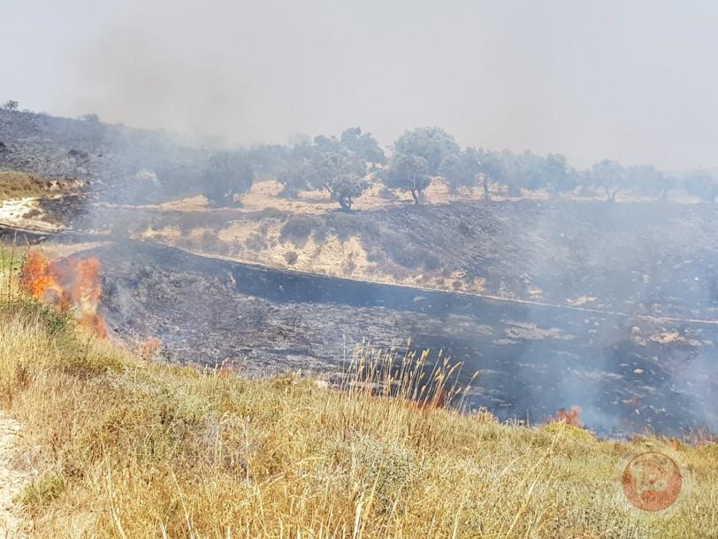 شاهد- مستوطن يحرق عشرات الدونمات الزراعية جنوب نابلس