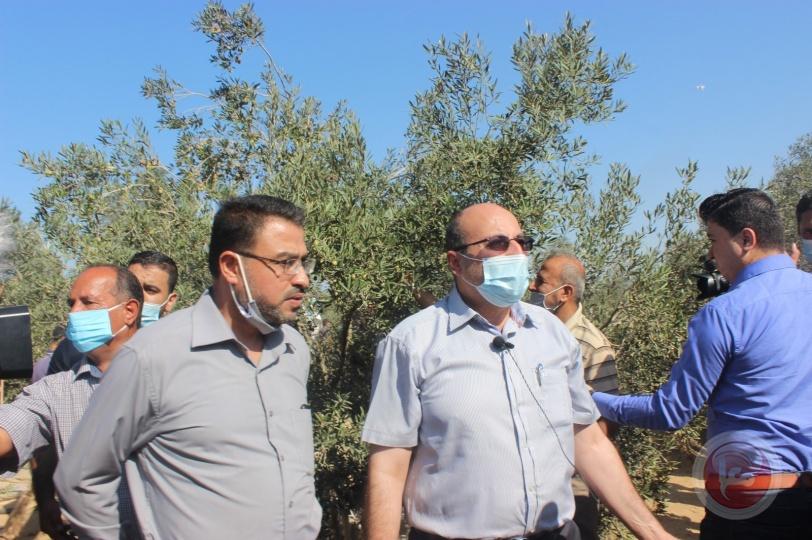 بالصور: غزة تبدأ بقطف ثمار زيتونها وتعصر زيتها