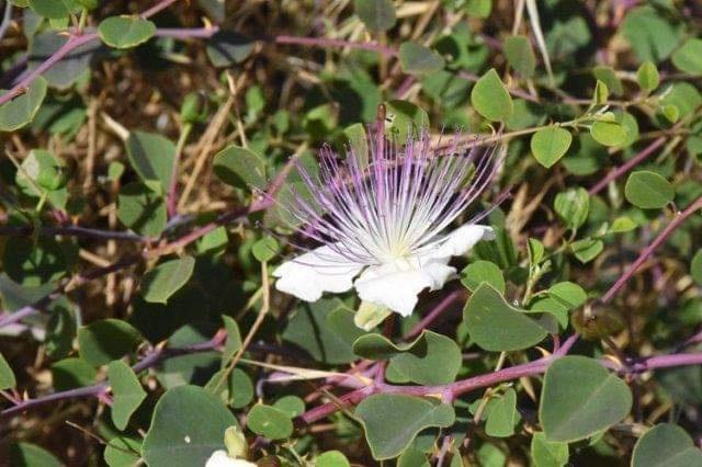 الحياة البرية وجودة البيئة  تبدآن مشروع الحفاظ على التنوع الحيوي والمشهد الطبيعي شمال الخليل