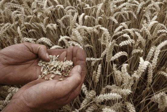 فاو: استمرار ارتفاع أسعار الغذاء عالميا