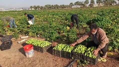 عائلة الشيش تناشد الرئيس التدخل بعد أخطارها باخلاء الارض التي تزرعها منذ عام 1963