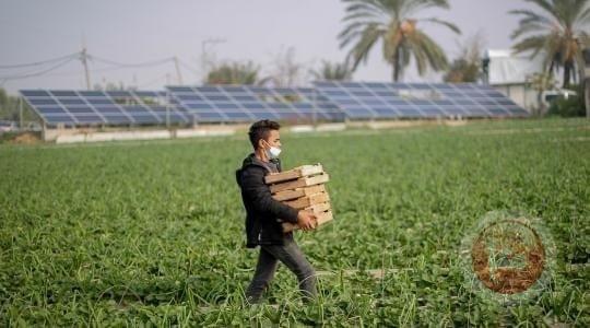 انخفاض كبير في أسعار الخضروات بغزة بعد منعها من التصدير