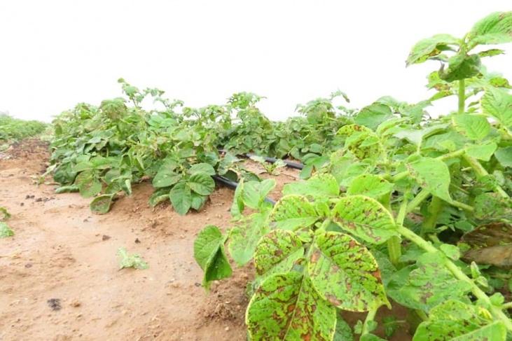الزراعة بغزة تنفي إصدار أي قرار بمنع أي شركة من استيراد أي مبيد زراعي